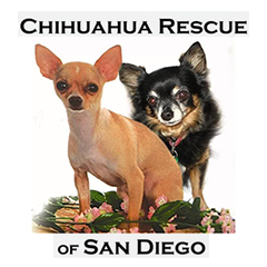chihuahua-rescue-of-san-diego
