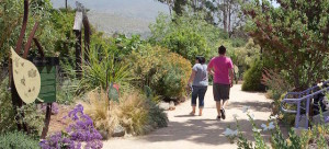 Free Garden Tour @ The Water Conservation Garden