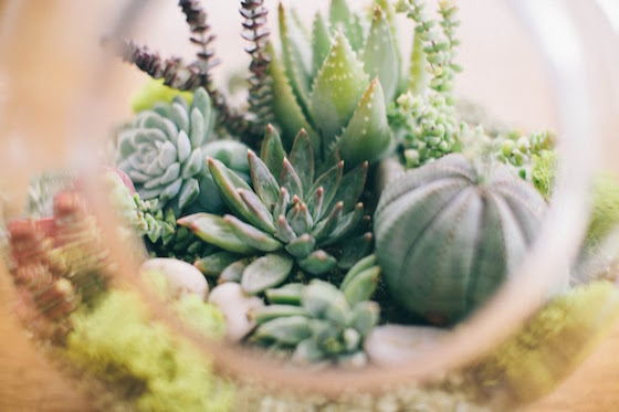 DIY Succulent Terrarium Workshop at the Rancho SD Library